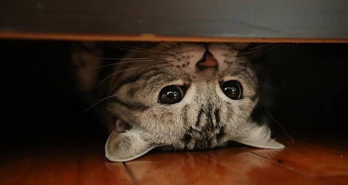 acoustic-kitty-og-pic