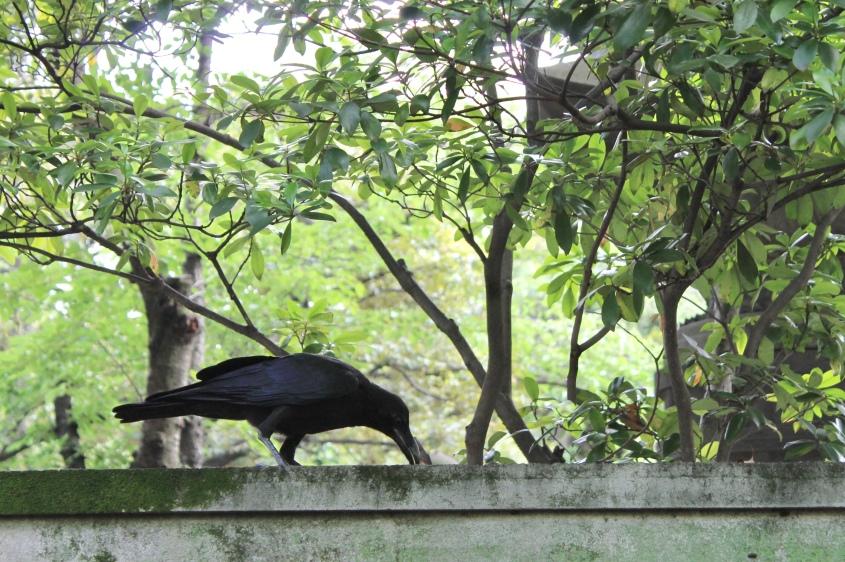 Crow near Jizō Bosatsu statues