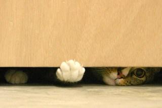 Under the door