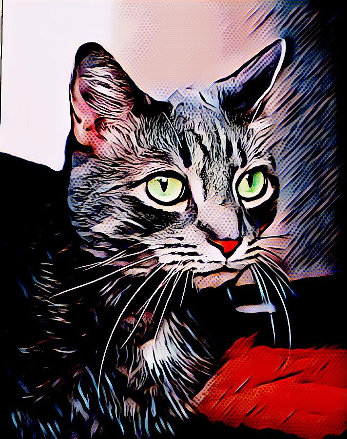 Happy International CatDay!