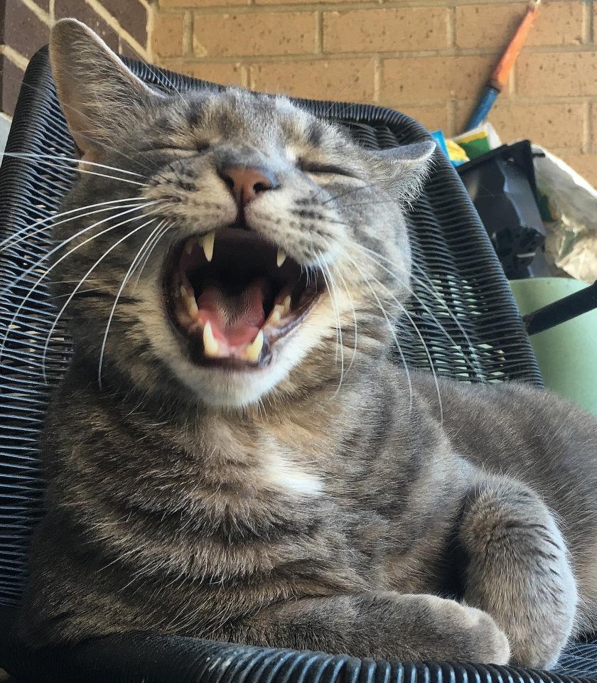 Buddy laughing