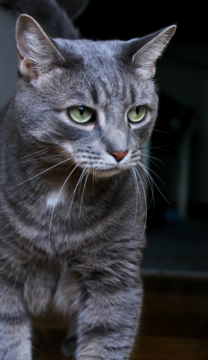 Buddy the Cat: Being Handsome