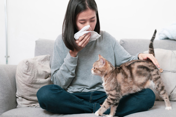 Cat Allergies No More With HypoCat!