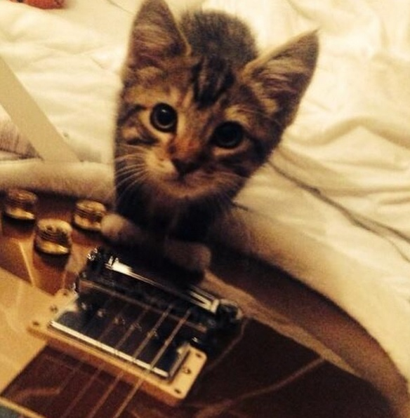 Graham, Ed Sheeran's cat