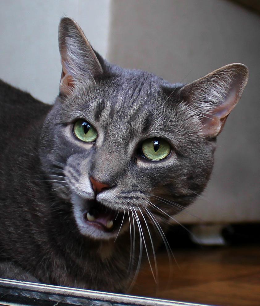 Buddy Angry