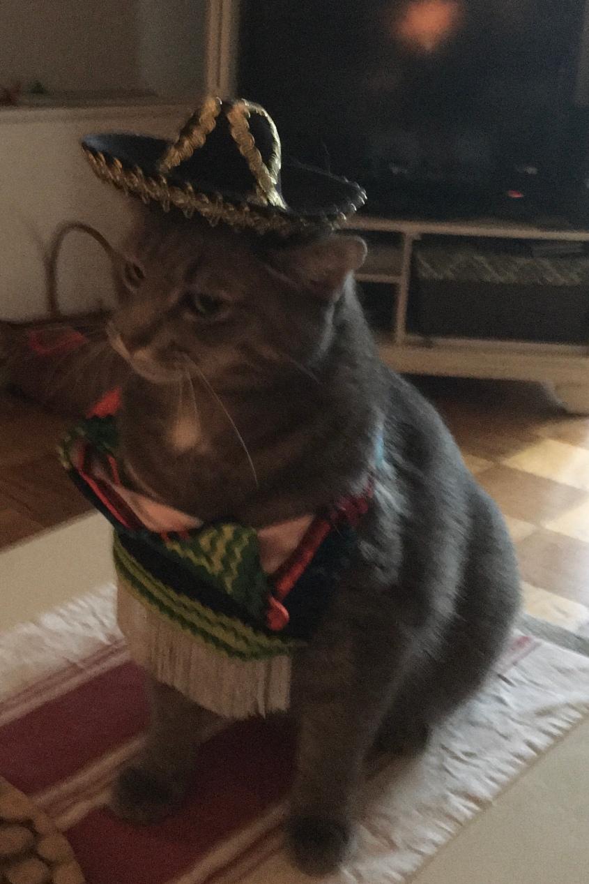 Buddy on Halloween