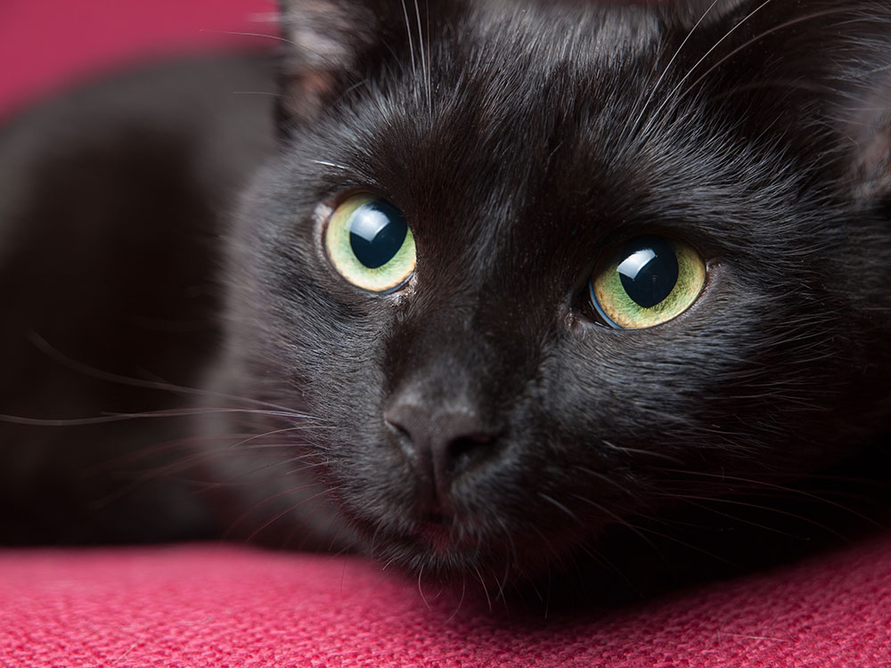 blackcat5