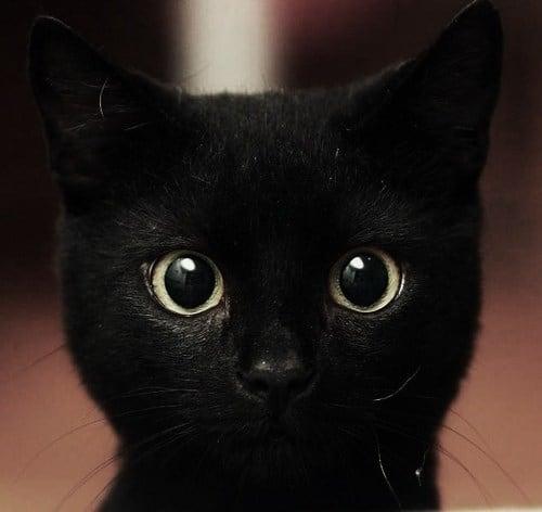 cuteblackcat