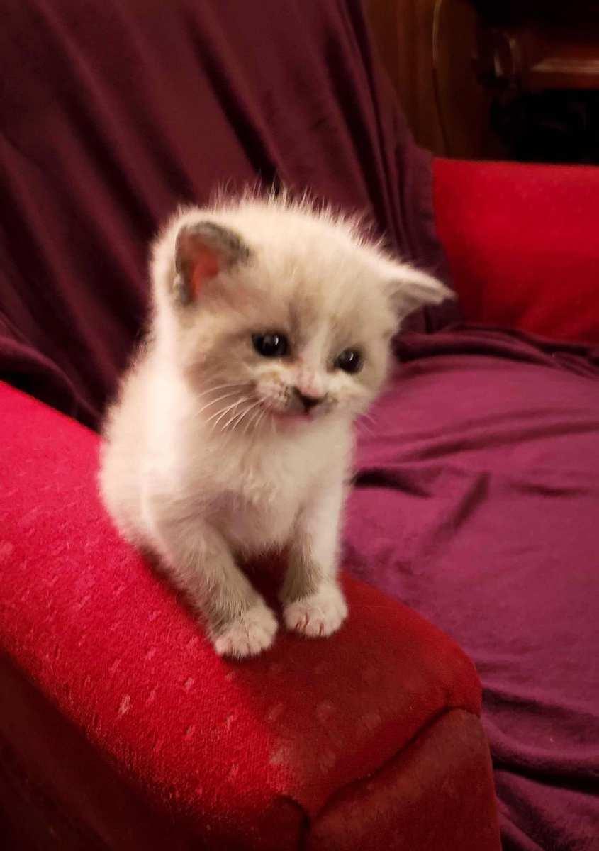 Blossom the Smiling Kitten