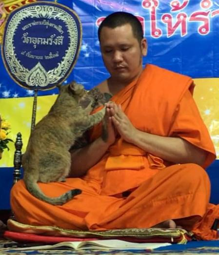 The Cat and the Monk