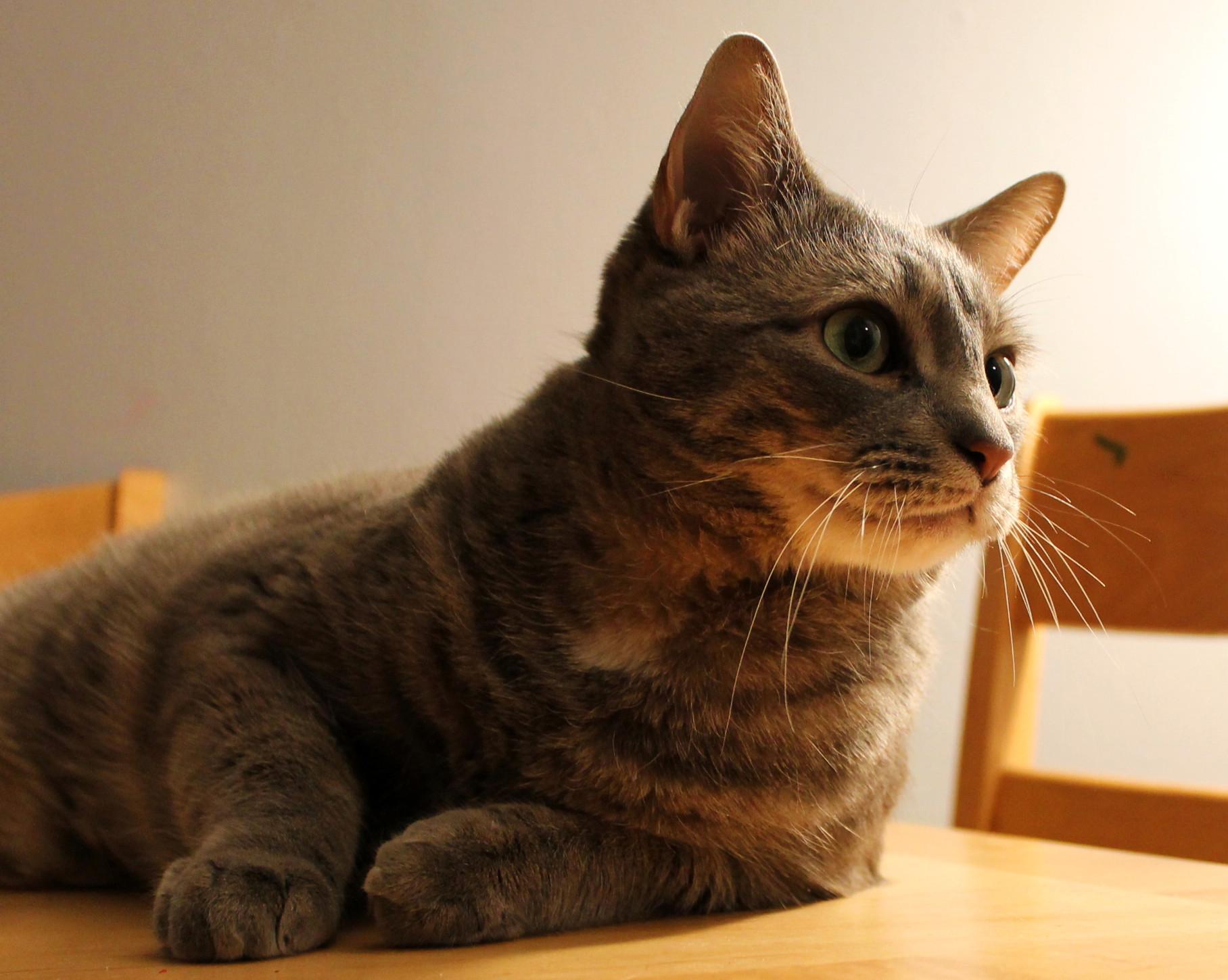 Buddy on a table