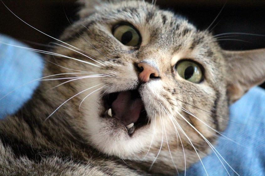 scaredcat2