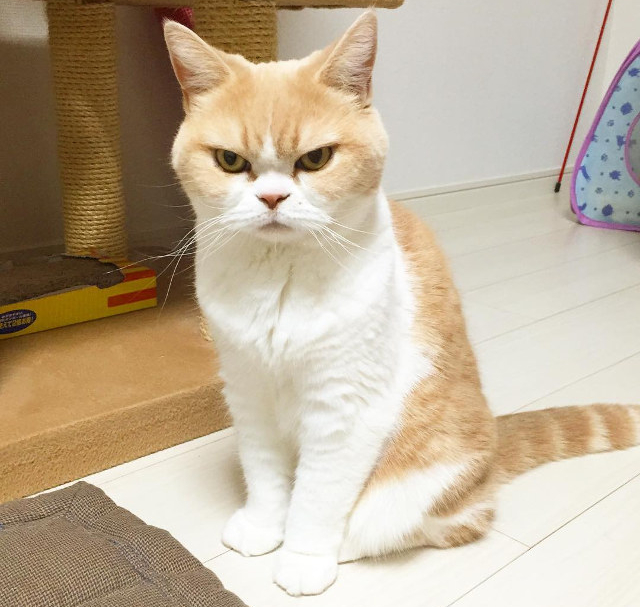 angrycat4
