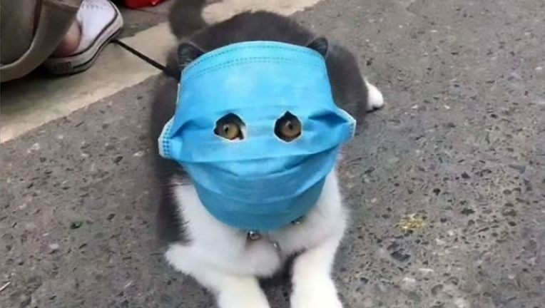 Animals-Face-Mask-ASIAWIRE-4