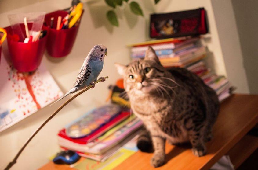 catbird4