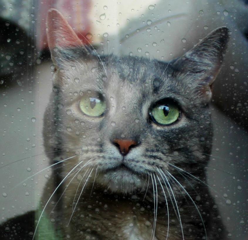 buddy_window_close_nofilter2