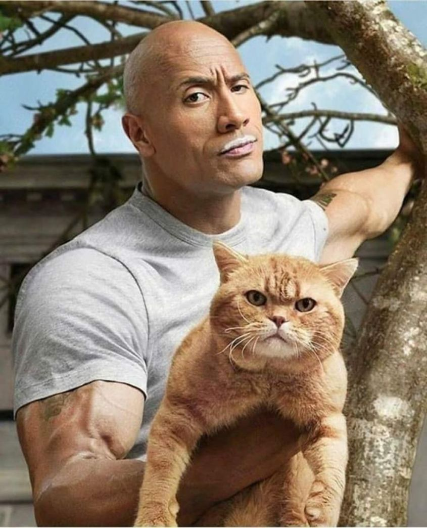 The Rock and His Cat
