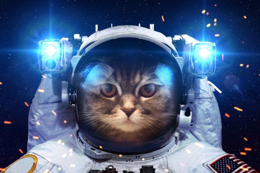 catsinspace3