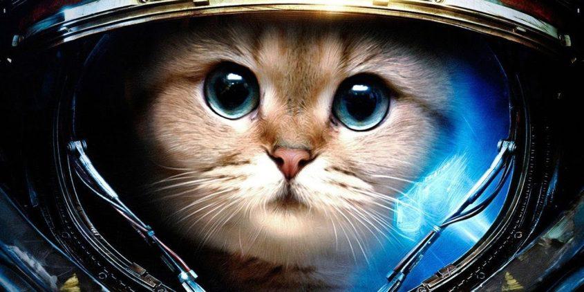catsinspace_large