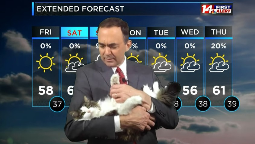 Betty-Weather-Cat-Featured