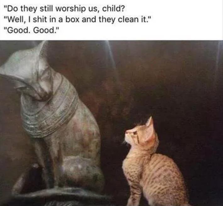 catworship