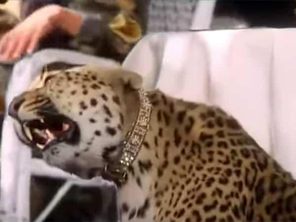 JosephineBakerStory-1991-paris-1920s-cheetah