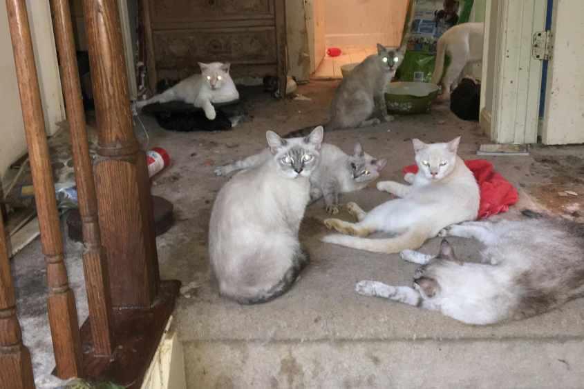 hoardingcats2