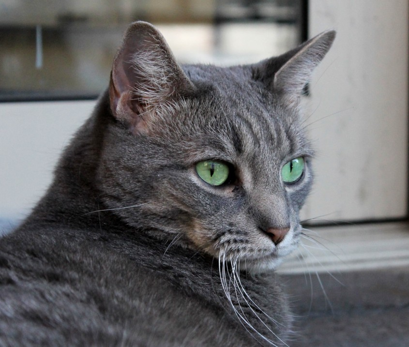 Buddy the Cat: Dashingly Handsome!