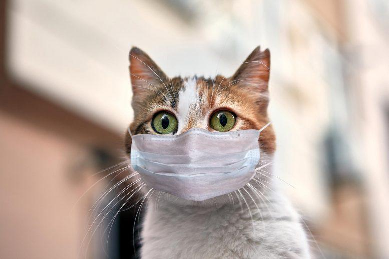 Cat-COVID-19-Mask-777x518