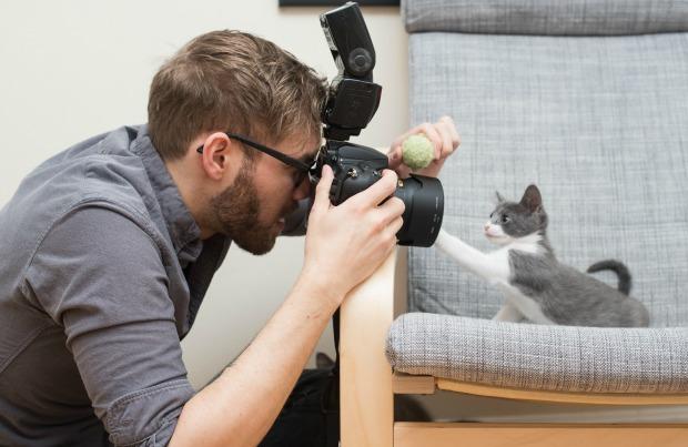 cat-photo-tips-main