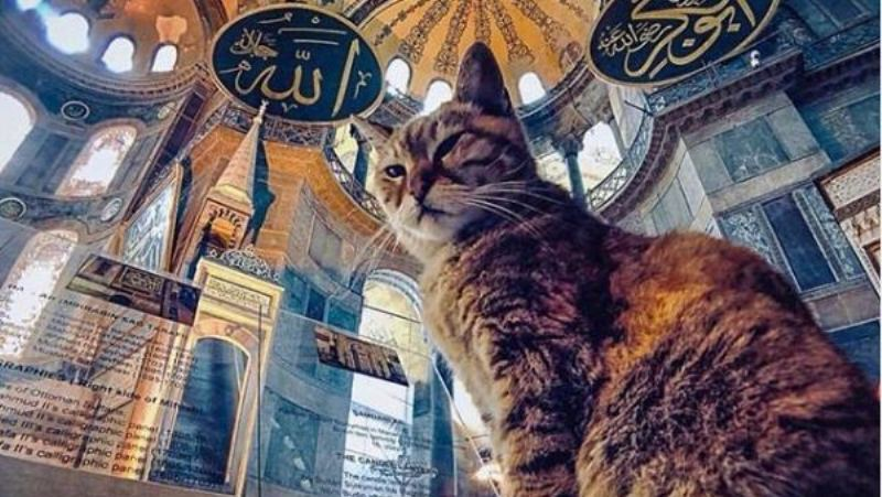 Gli the Cat of Hagia Sophia