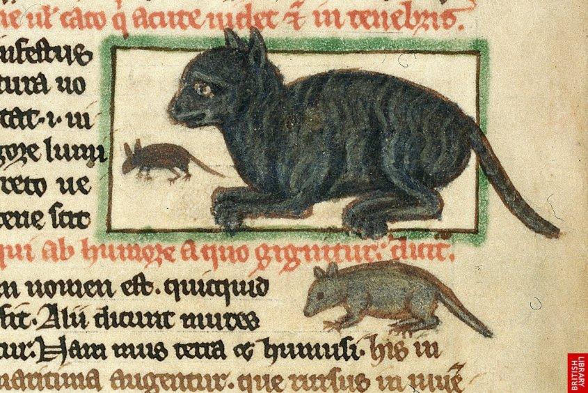 catsdarkages