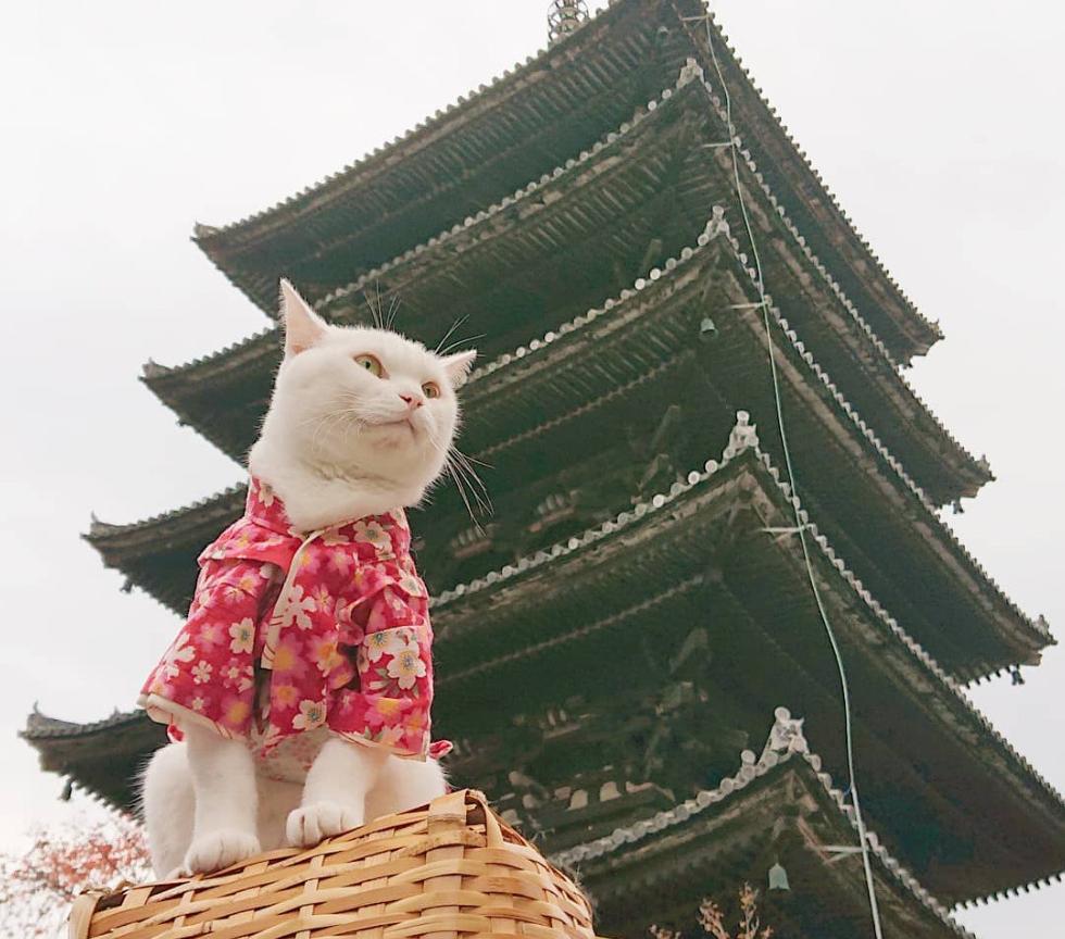 Screenshot_2020-08-12 ねこ地蔵とおる ( nekojizo) is on Instagram(7)