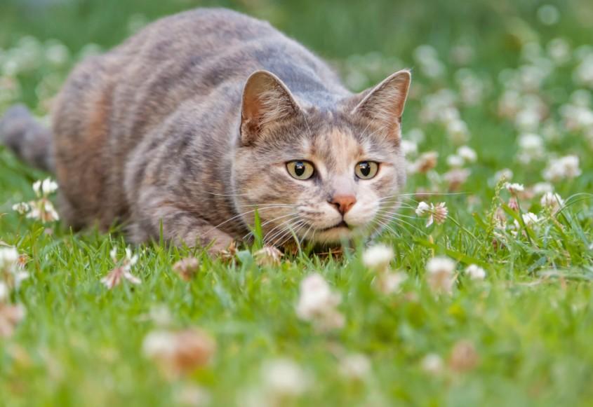 cat-predation