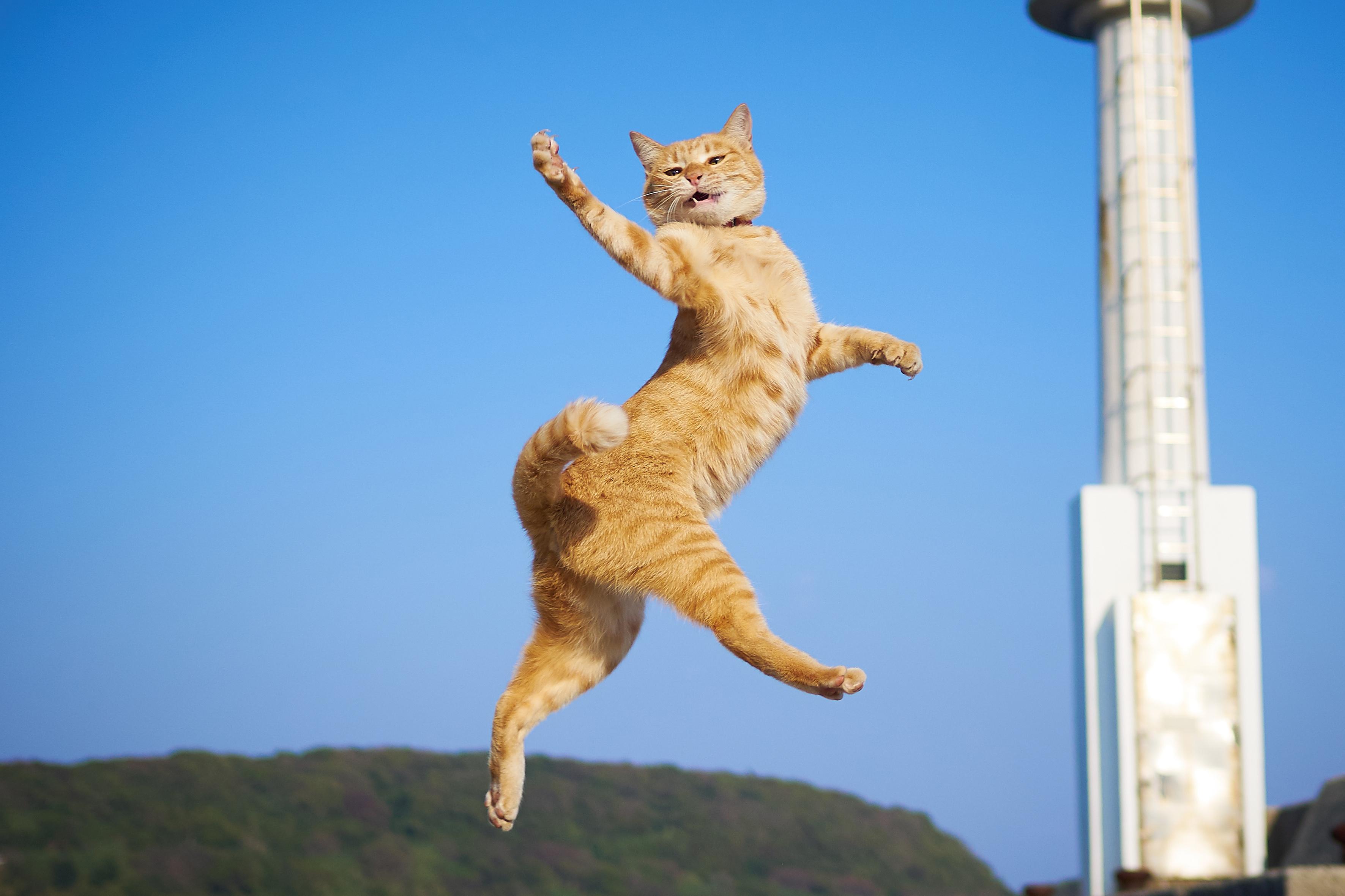 Kung Fu Cat Photographer