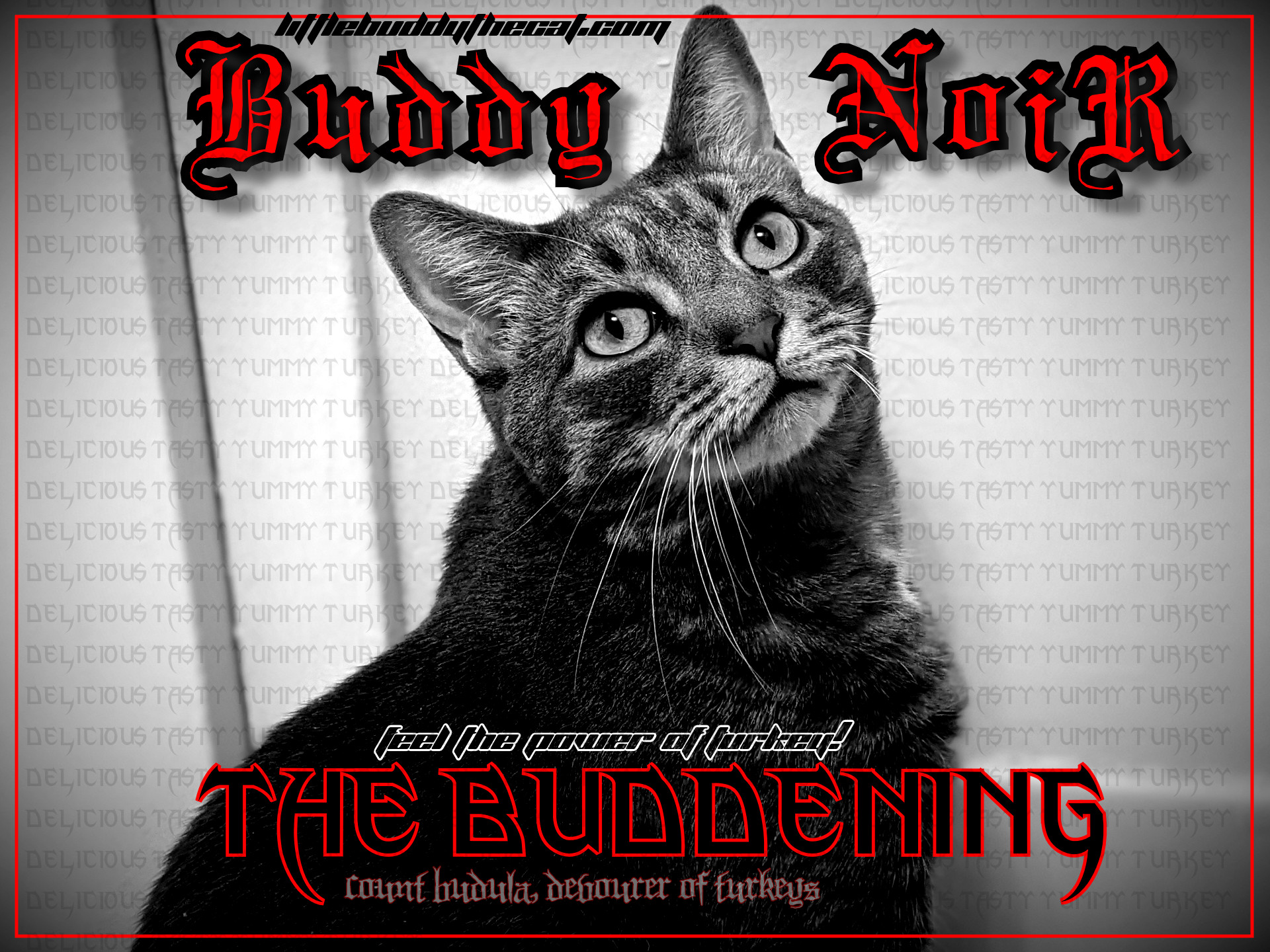 buddy_noir