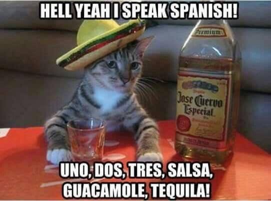 Spanish-Cat