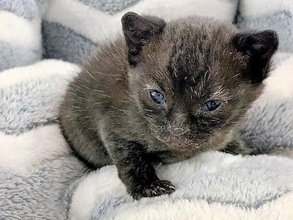 Molly the kitten