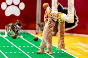 Adorable and adoptable kittens compete for the coveted Kitten Bowl VIII trophy. Hosted by TV personality and animal advocate, Beth Stern, this year's feline catstravaganza promises to be more PAW-SOME than ever! Credit: ©2021 Crown Media United States LLC/Photographer: JJ Ignotz