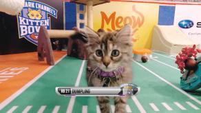 kittenbowl3