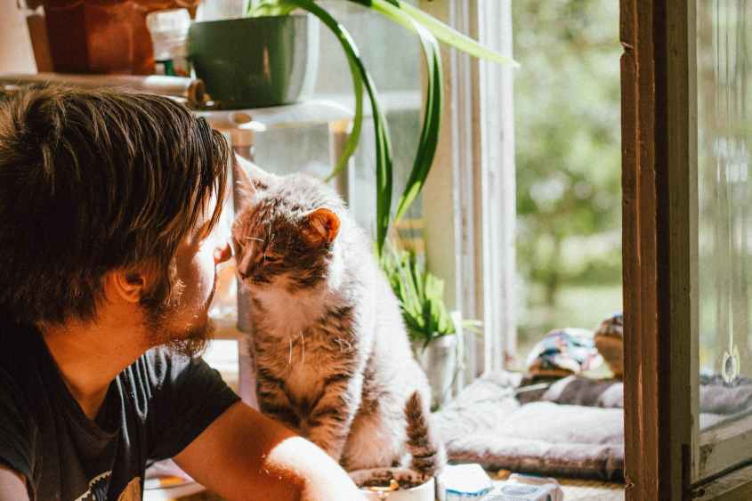 cute cat smelling unrecognizable bearded man on windowsill at home