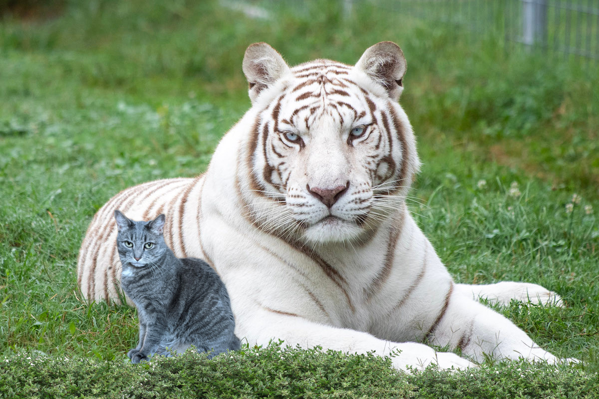 Bud and Gerald the Tiger
