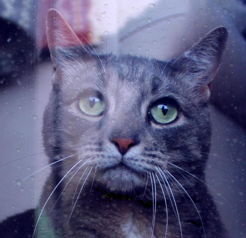 buddy_window_rain