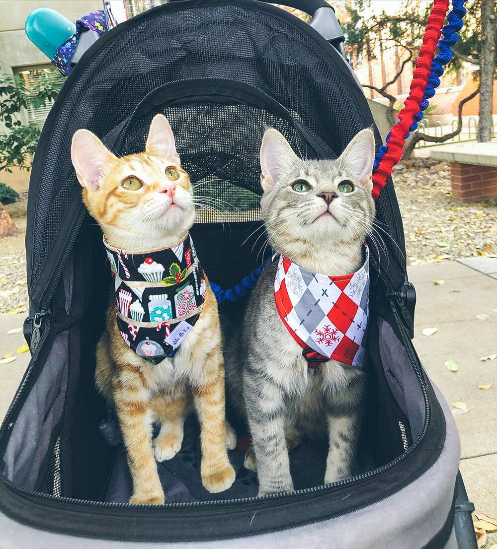 Cats in Mighty War Chariot