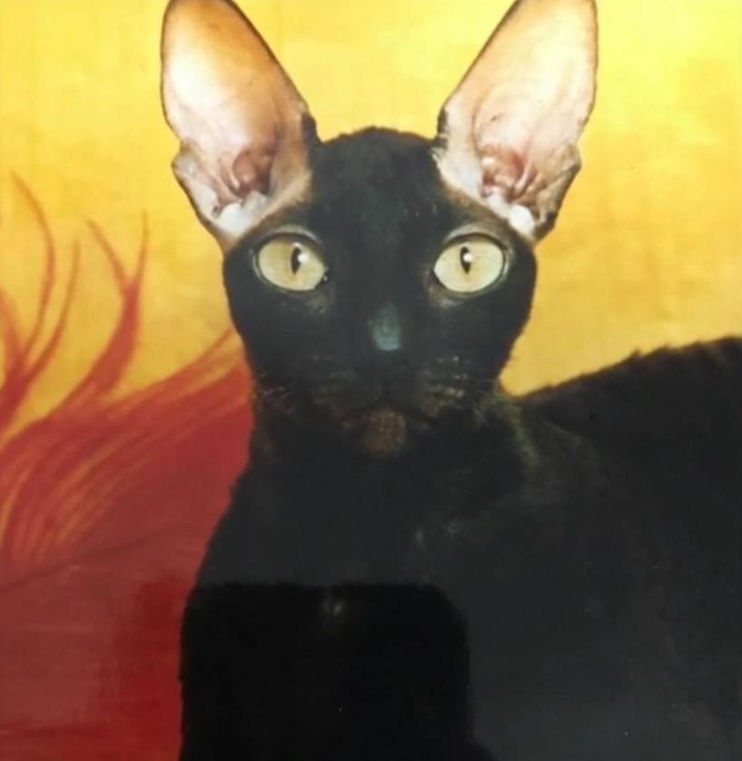 donnathecat