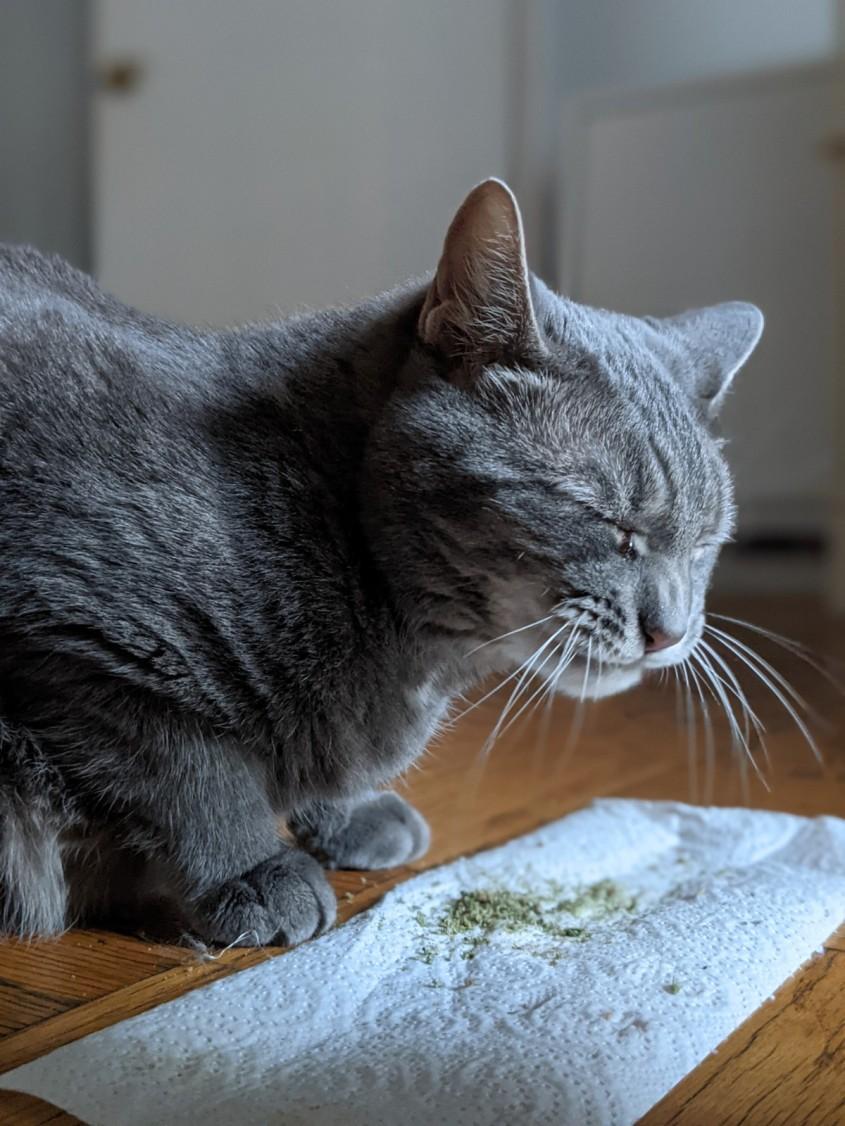 Buddy on Catnip