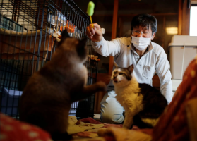 Screenshot_2021-03-07 The man who saves cats in Fukushima's nuclear zone – in pictures