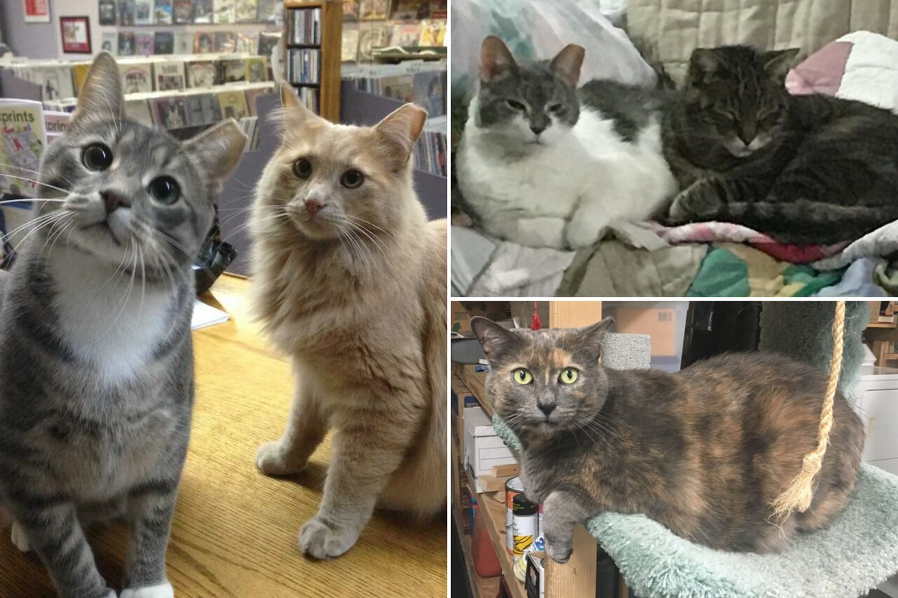 Shop Cats of Cleveland
