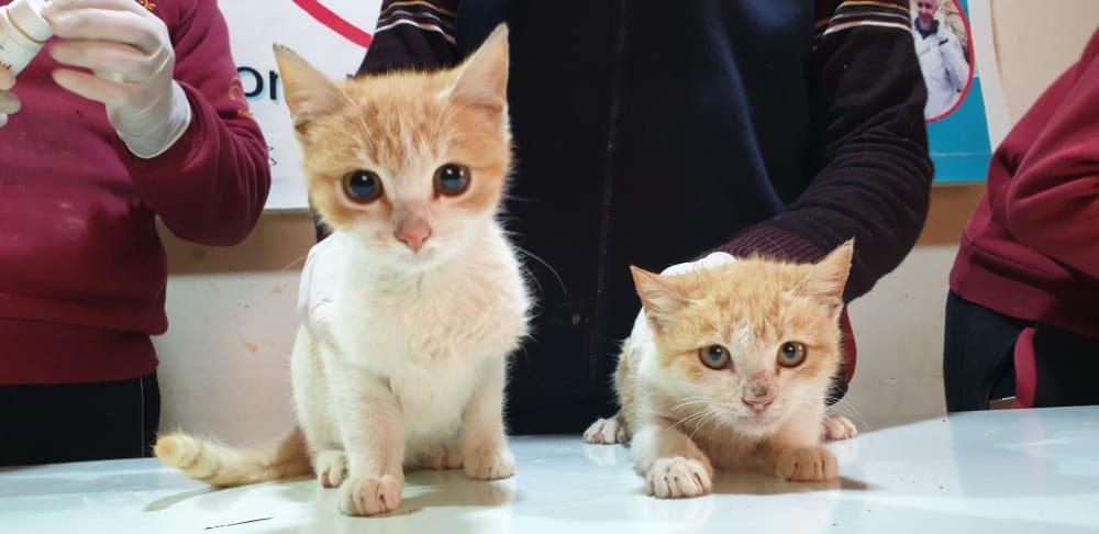 Ernesto's Sanctuary kittens