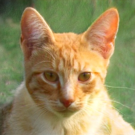 thiscat2